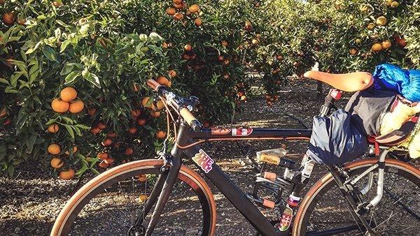 pedalare foresta mandarini agrumeti agrumi arance limoni comunidad valenciana bicicletta cicloturismo naturale rurale