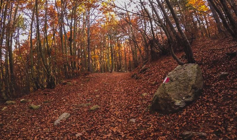 sasso canale discesa autunno colori arancione giallo rosso foresta bosco